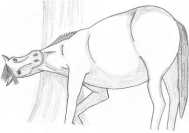 Horse 1 by SpellCaster-KaYa