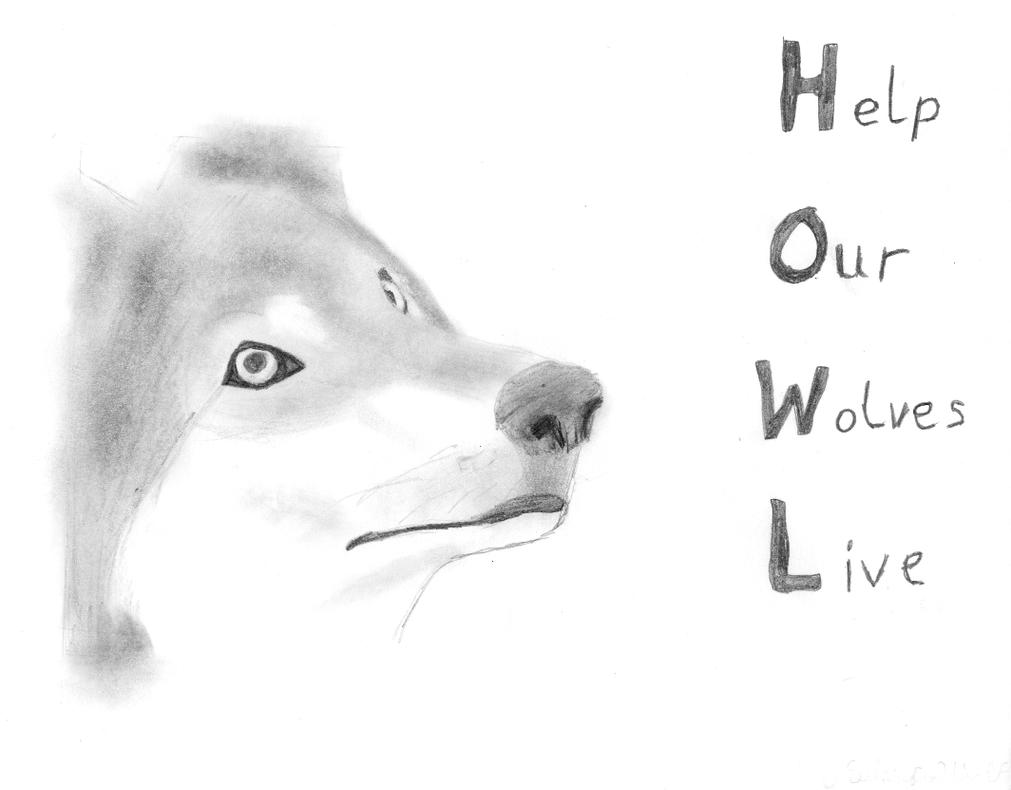 pencil drawings pencil drawings wolves