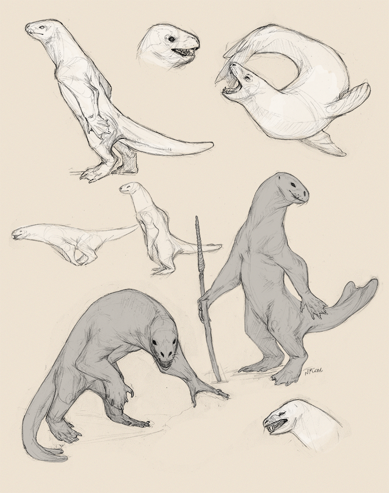 Seal Race Sketches by tashcrow on DeviantArt