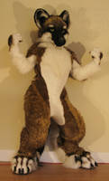 Dhole Fursuit Costume Full by Beetlecat