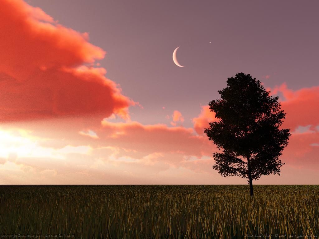 Evening Star by nevergetfooledagain