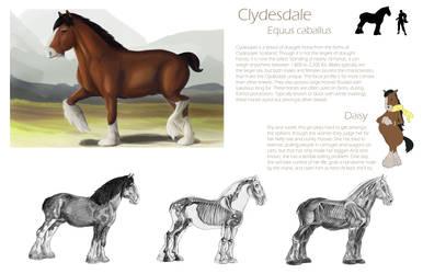 Orthographic Horse Studies