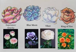 Elemental roses vs actual rose types by Karren-san