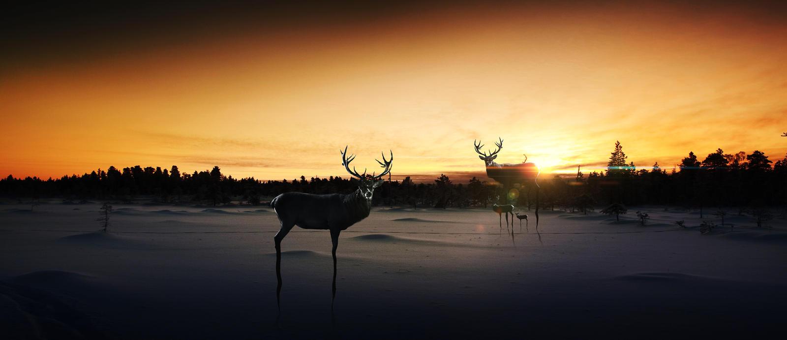 Deer's by vidinha