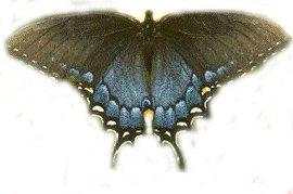 butterfly3 by faeryfroggy-stock