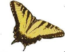 butterfly4 by faeryfroggy-stock