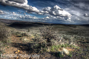 Ginkgo Petrified Forest, HDR by emmacatphotography