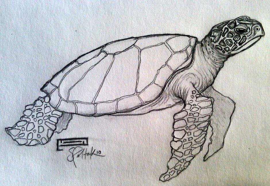 Sea turtle drawing - photo#3