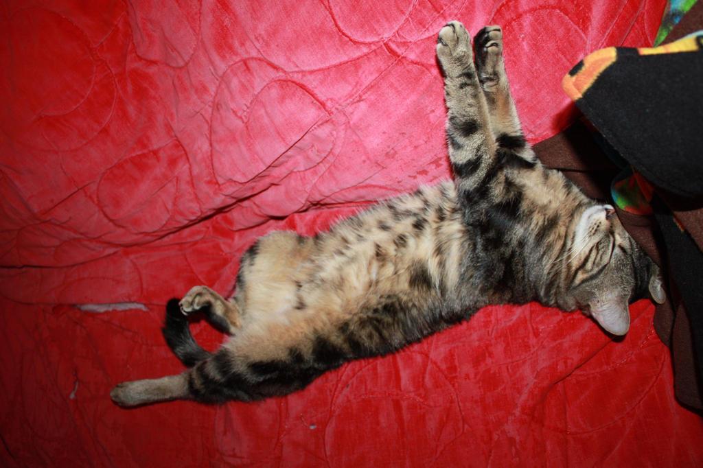 Tinycat Sleeping by KarmicCircle