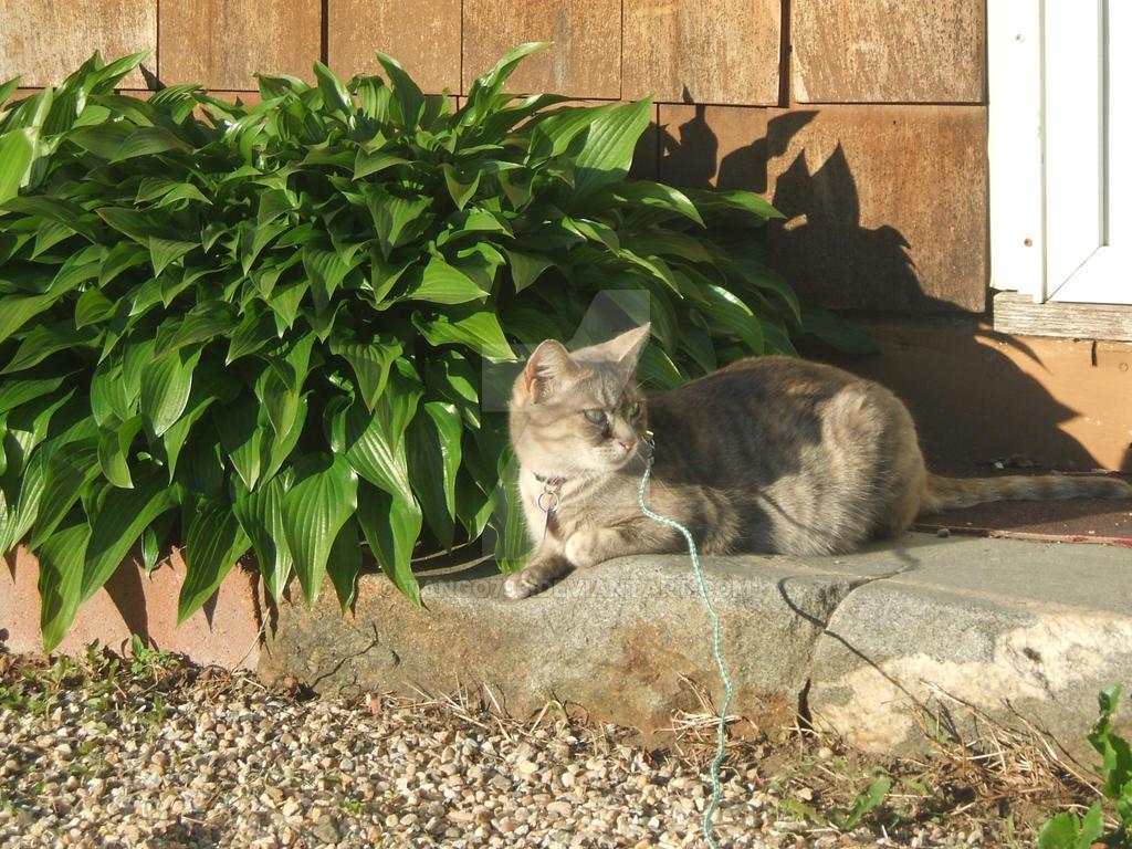 Portrait Missy Meow by tango793