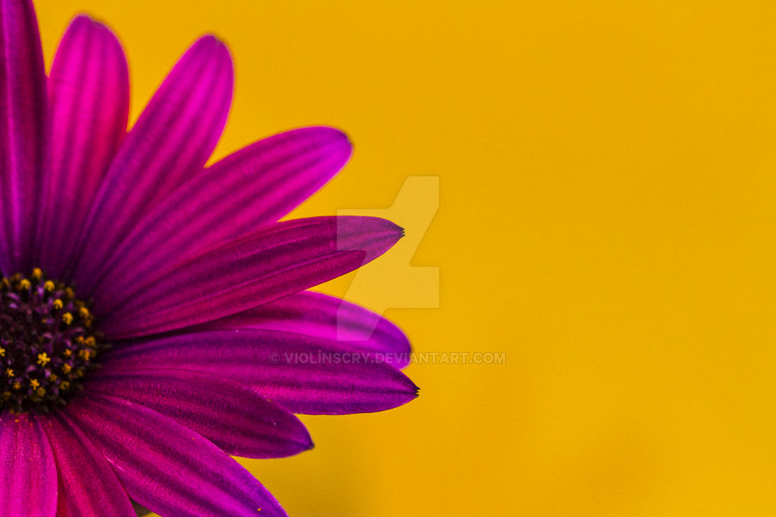 Spring Colours by Violinscry
