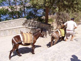 LOL Donkeys by MeTheObscure