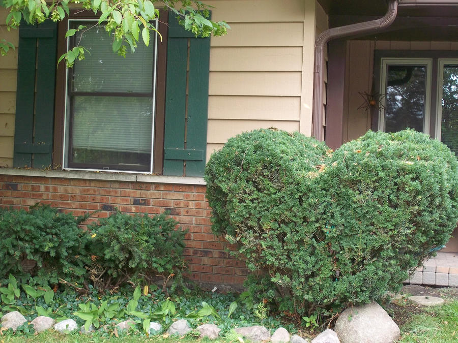 My heart-shaped bush! by BlackChallenger