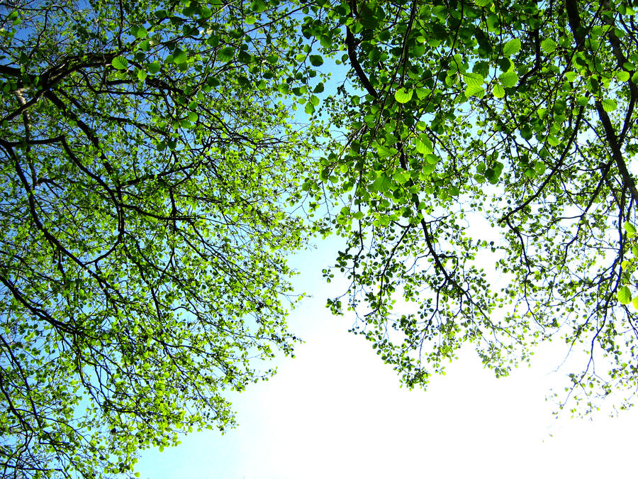 Leaves in the sky by Tigerente-in-love