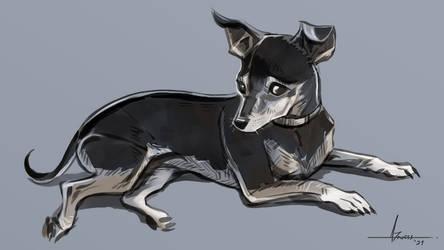 Runaway Doggo study