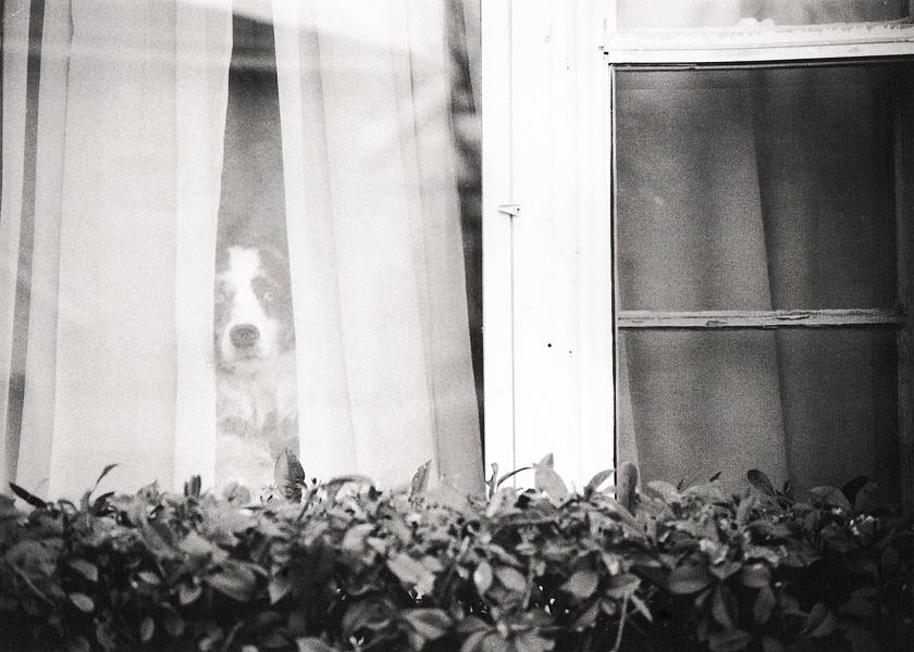 Panda in the Window by xaliaz