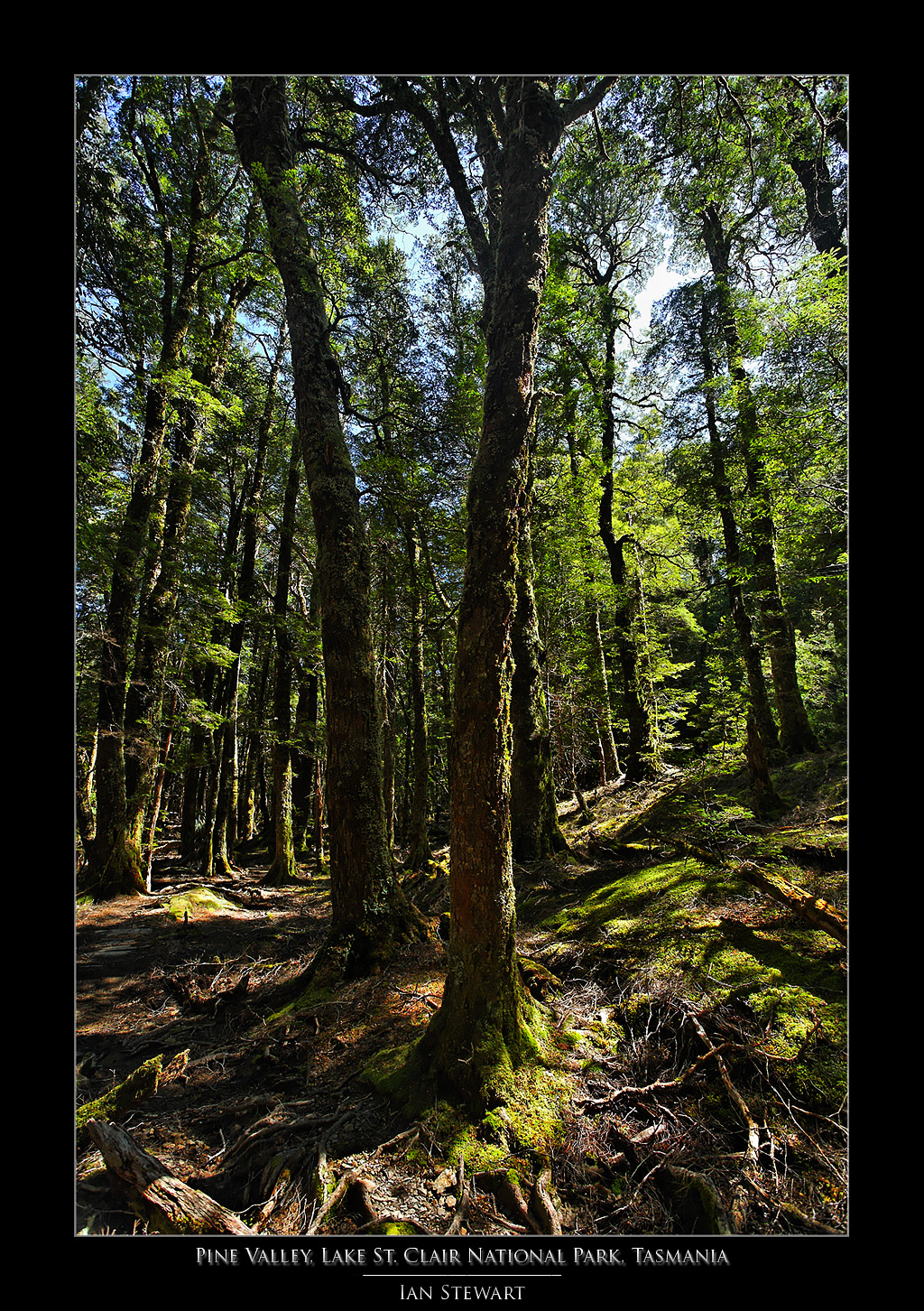 Pine Valley Forest by eehan