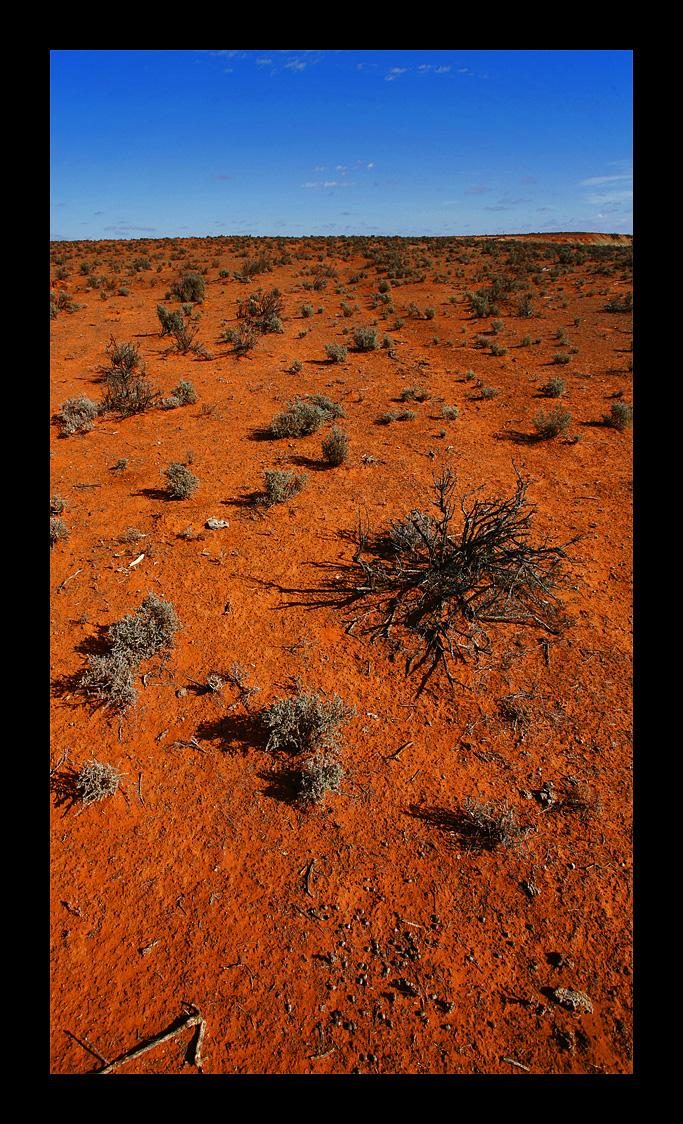 Australian Desert - Salt Bush by eehan
