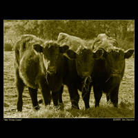 We Three Cows by eehan