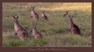 Kangaroo Family, Maria Island by eehan