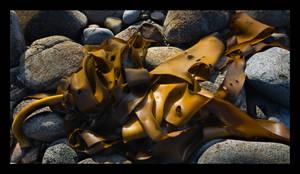 Kelp by eehan