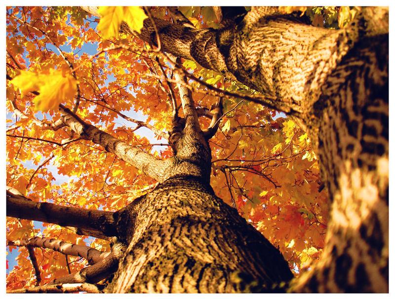 autumn by Paik666