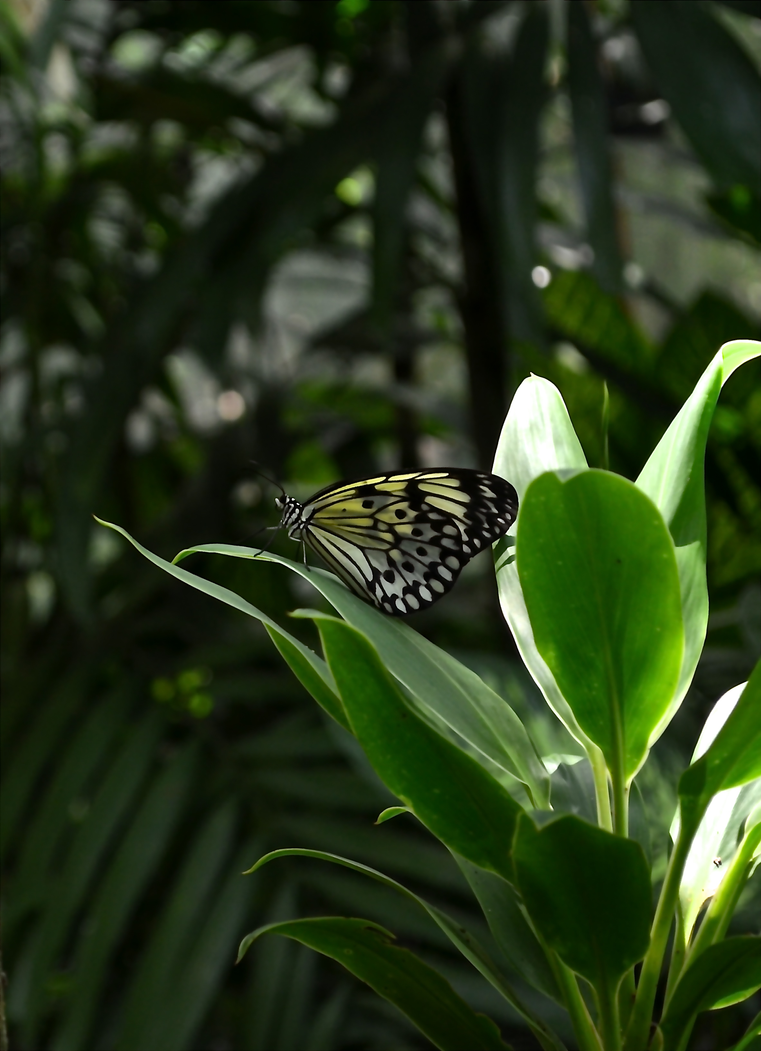 Butterfly2 by natashanne7