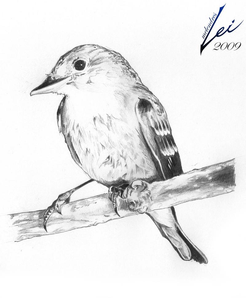 Bird Pencil Sketch by lei-melendres on DeviantArt