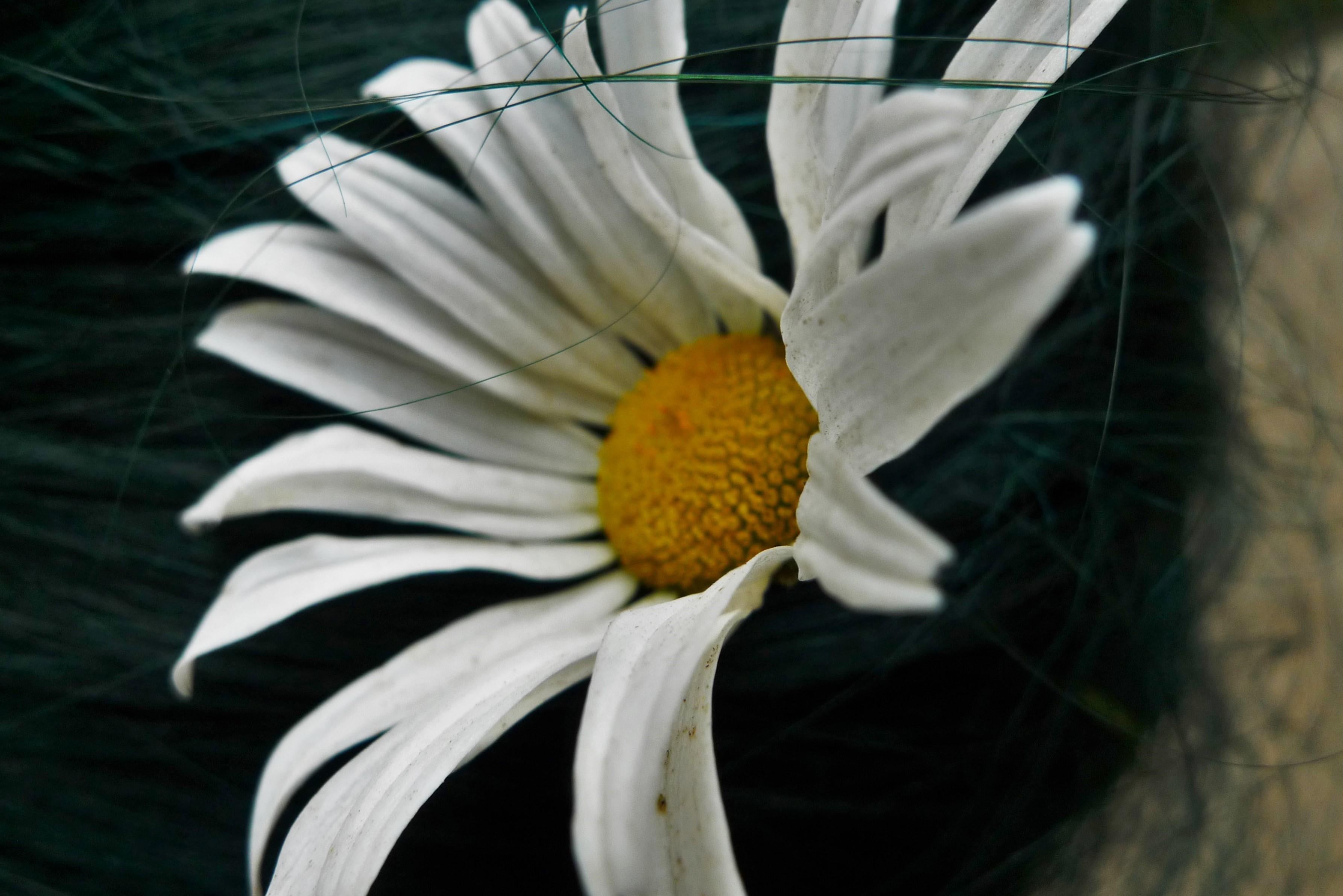 flower in her hair