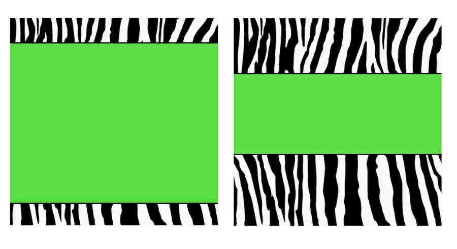 lime green zebra wallpaper - photo #12