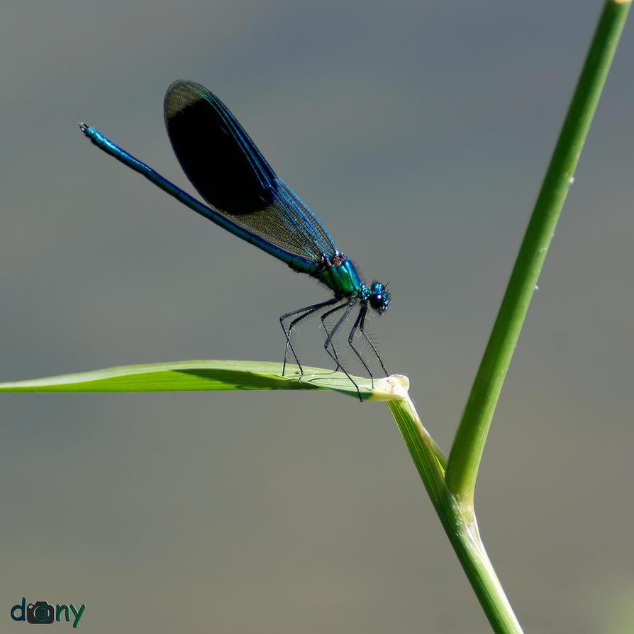 Blue Lady by danys-world