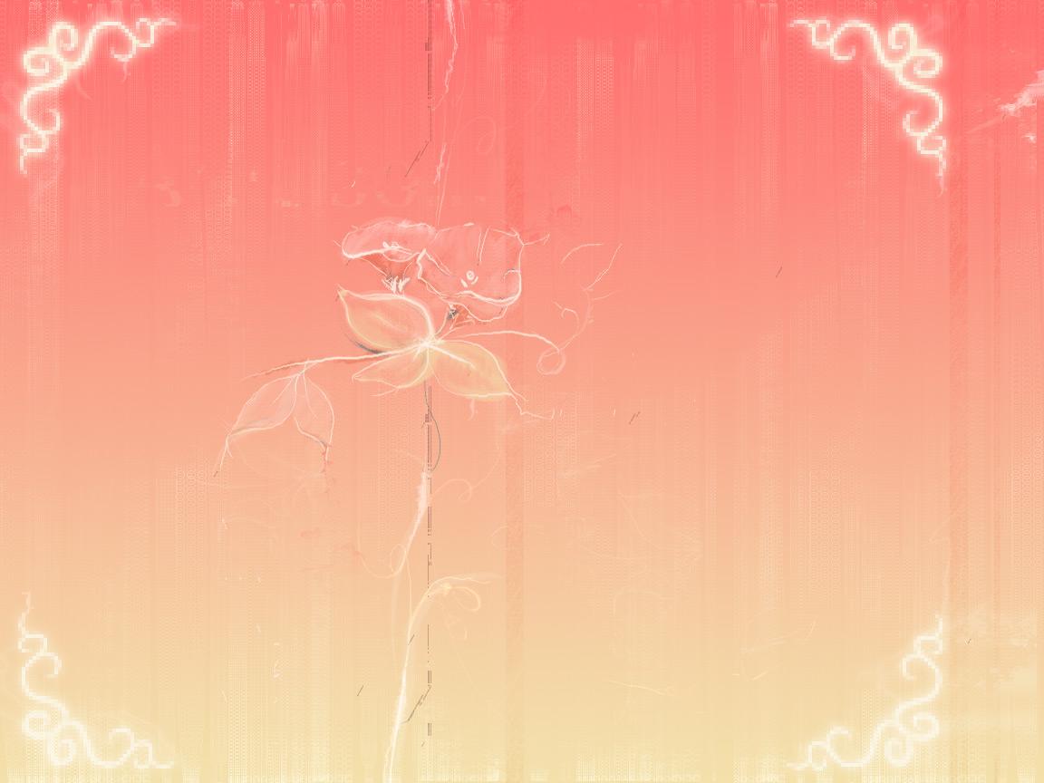 intermission in rose