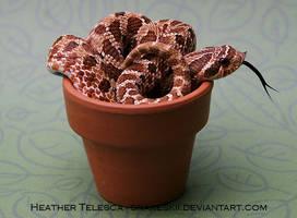 Zot in a Pot by HeatherTelesca
