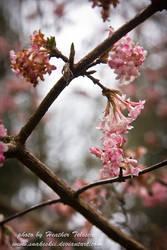 Touching Pink by HeatherTelesca