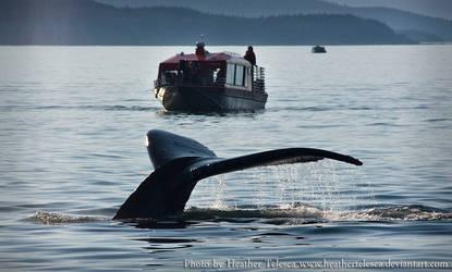 Humpback Tail by HeatherTelesca