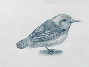 A random bird ~