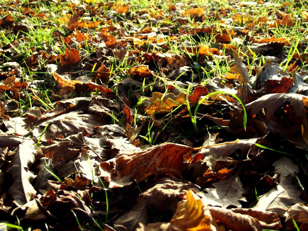 Dying Autumn Leaves by missanimestranger