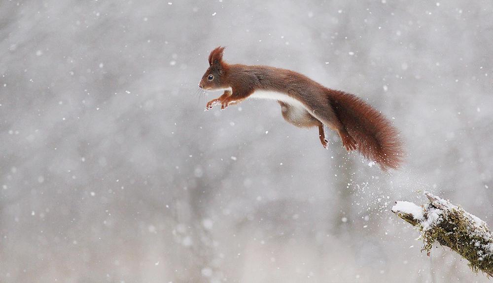 Snow Rocket by JulianRad