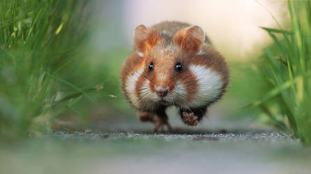 Hamster on a Mission