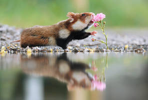 Hamster and Rose