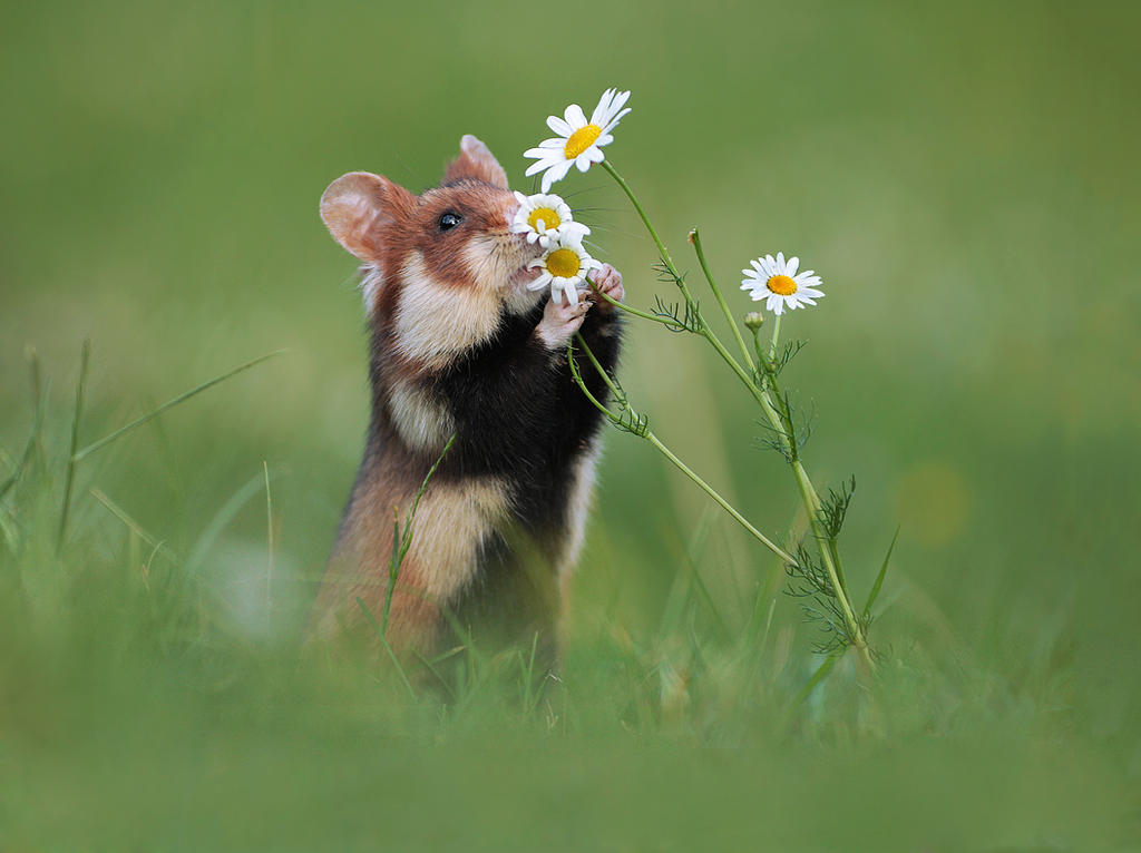 Take Time to Smell the Flowers by JulianRad