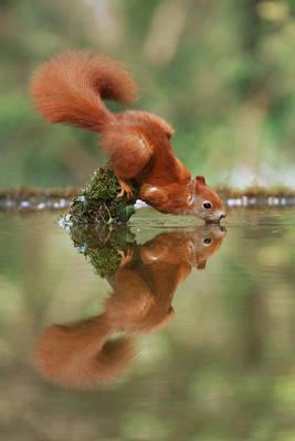 Yoga Squirrel