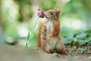Smell of Spring.. by JulianRad