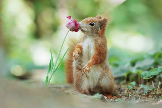 Smell of Spring..