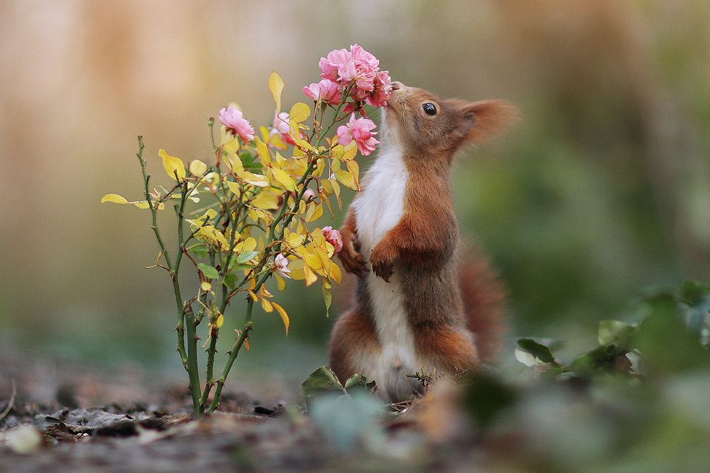 Stop and Smell the Roses by JulianRad