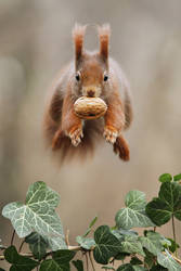 Is it a bird? Is it a plane? No its a squirrel! by JulianRad