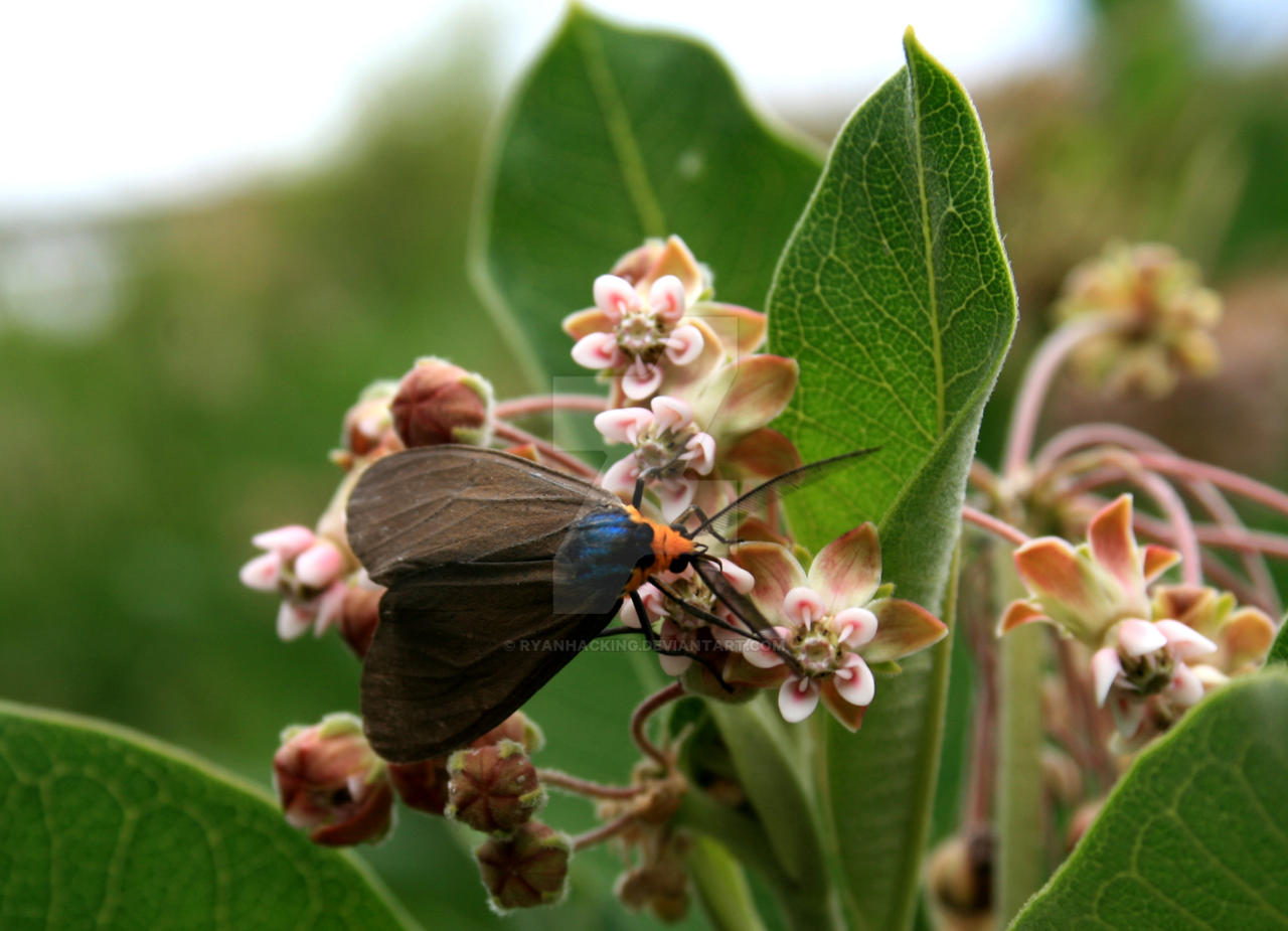 moth on a leaf by ryanhacking on deviantart