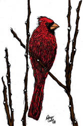 Cardinal in Scratch board 2.0