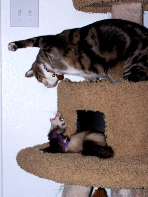 Loki vs Zoe by Darkbutterfly137