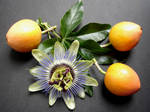 Passion Flower and Fruit by Thelma1
